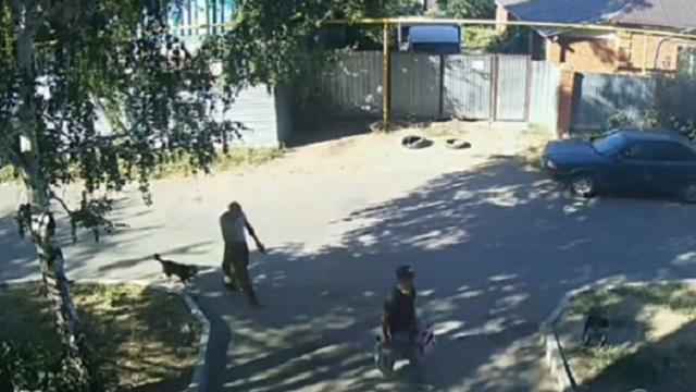 Полицейские Костаная прокомментировали факт гибели собаки