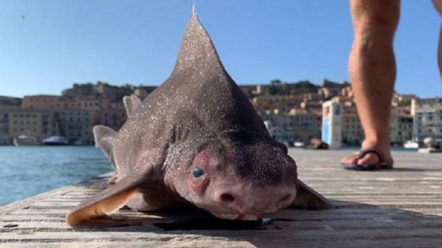 Рыбаки поймали странную рыбу и подумали, что это мутант