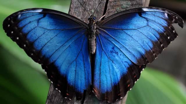Учёные рассказали, почему в природе редко встречается синий цвет
