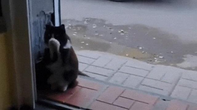 Видео: Бродячим котом-«артистом» из Экибастуза восхищены соцсети