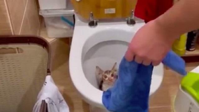 «Нажала смыв». Котёнок вылез из унитаза в квартире россиянки