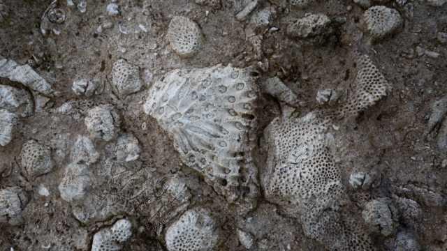 Обнаружено древнейшее существо на Земле
