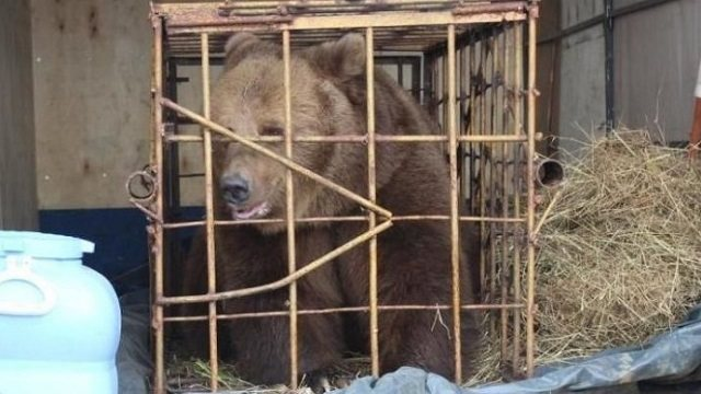 Как себя чувствует девочка, укушеннная медведицей в Костанае