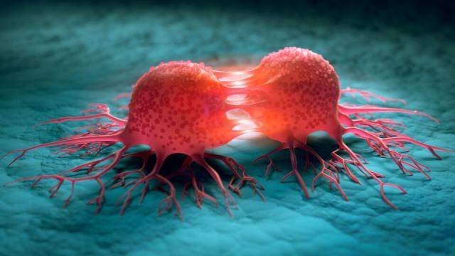 Простой способ замедлить рост раковых клеток нашли учёные