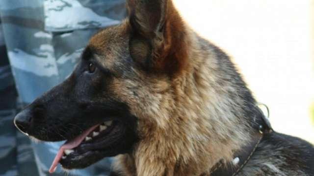 «Рекс-ищейка»: Собака помогла найти пропавшую бабушку в Костанае