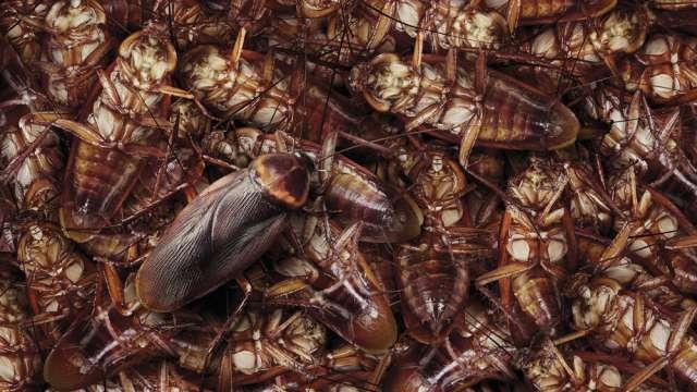 Видео: Огромные тараканы-мутанты захватили подъезд многоэтажки