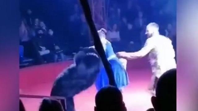 Видео: Цирковой медведь напал на беременную дрессировщицу