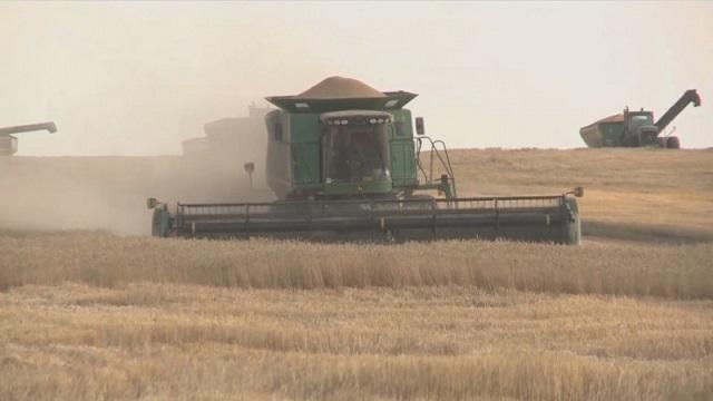 «Как бороться с засухой?»: Необычный способ нашел казахстанец