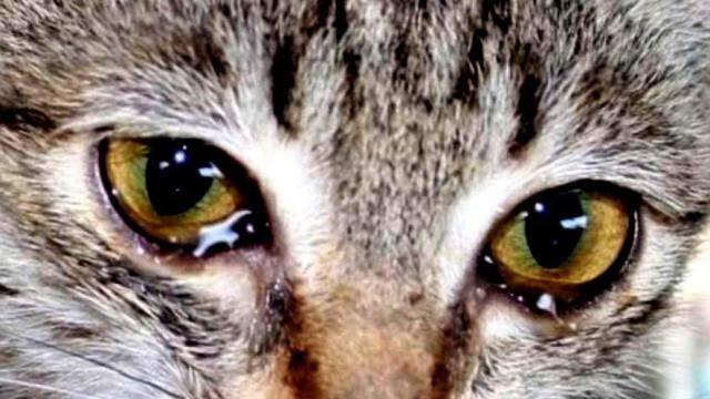 «Сожгли морду, но он выжил»: Кота сделали инвалидом в Казахстане