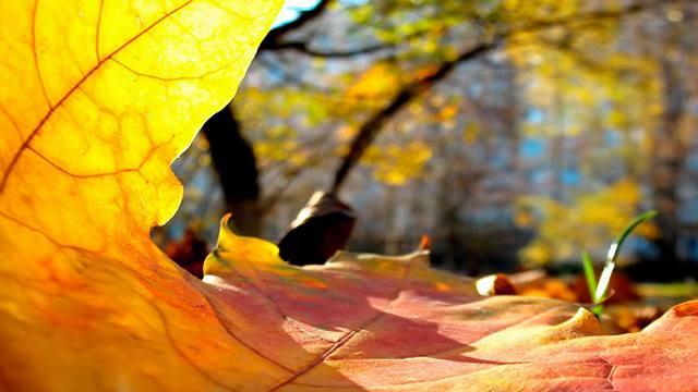 О погоде в Костанае и Рудном на пятницу, 15 октября