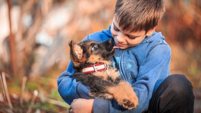 Пропавший ребенок найден спящим с бездомной собакой в подвале